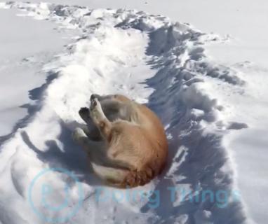 雪の上で変な滑り方をする犬