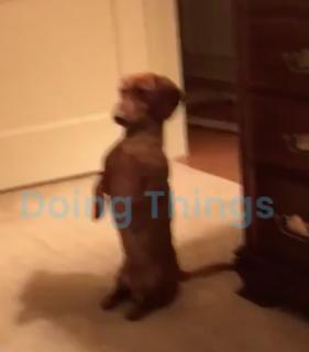 真っ直ぐに立つ犬