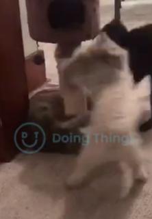 猫の仲裁に入る犬