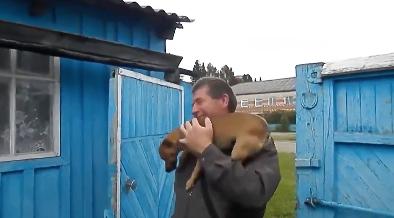 飼い主ご帰宅でテンションMAXな犬