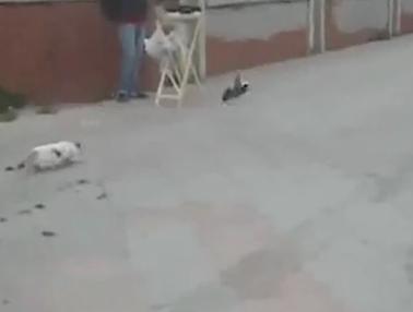 鳩捕獲失敗で落ち込む猫