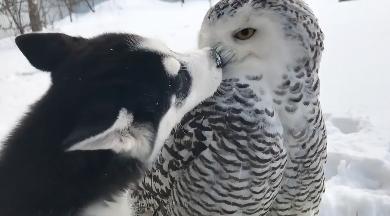 犬と仲良しすぎる鳥