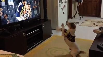 サッカーのゴールに興奮する犬