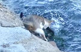 釣り名人な猫