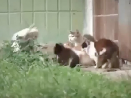 ネズミに完敗な猫集団