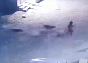 子どもを襲う危険な犬の集団