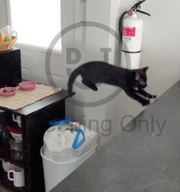 ジャンプ失敗で顔面強打する猫