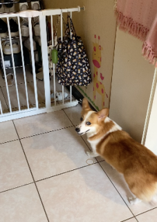 極細の隙間を抜ける犬