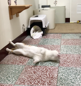 ロケットみたいに横ジャンプする猫