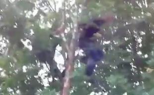 木登り失敗で痛すぎる落下