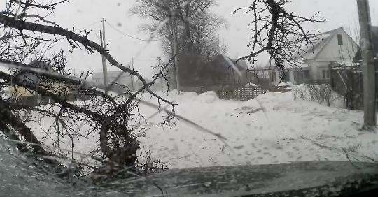 雪道で突然倒れてくる木