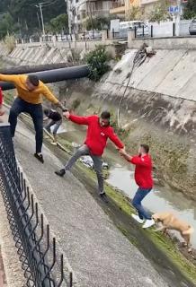 人間の鎖で犬を川から救出