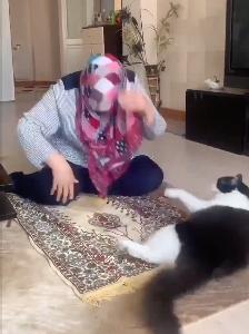 お祈り中の女性を邪魔する猫