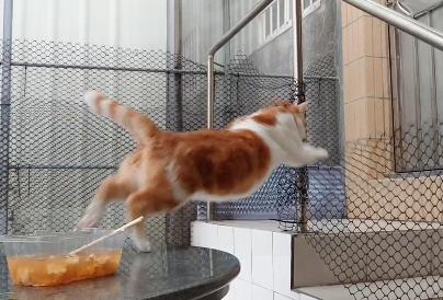 地味にジャンプ失敗する猫