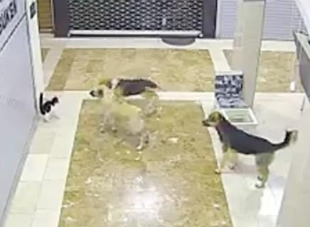 犬に襲われる猫を助ける勇敢な猫