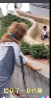 思ったように滑り台ができない犬