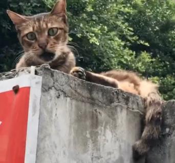 天国から地獄な猫