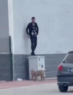 犬が怖くて逃げる男