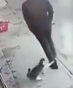 猫に攻撃されて自爆する男