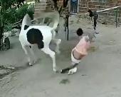 馬の背後に行ってはいけない理由